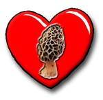 I Love Morels!