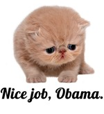 Nice job, Obama - Sad Cat
