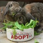 Rabbit Feeder