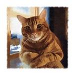 Buggs Tabby Cat