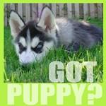 Got Puppy
