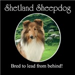 Bred To Lead Sheltie #1