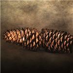 FALLEN - Pine Cones