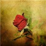 Miniature Red Rose II