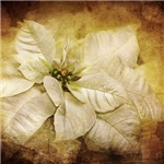 Vintage Poinsettia Flower