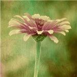 A Single Bloom Vintage
