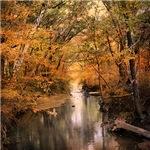 Autumn Riches 2