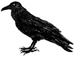 A Raven (duplicate)