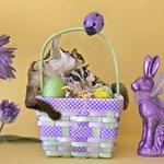 Easter #7