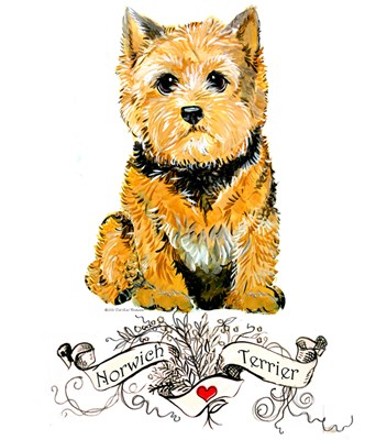 NORWICH TERRIER COLLECTION!