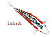 Shusui Koi