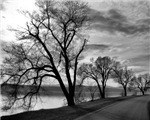 The Trees Series