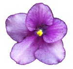 Beautiful Purple AV