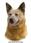 Aust Cattle Dog 9K009D-19