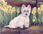 Westie in spring