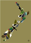NZ Birds Map