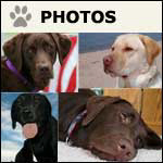 Labrador Art and Photography