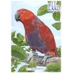 Ekko the Eclectus parrot