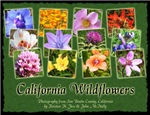 California Wildflower Calendar