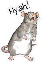 <b>Rattitude</b>