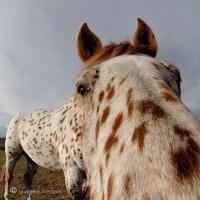 Humorous Equines