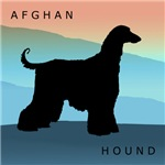 Afghan Hound Blue Mountains