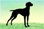 Grassy Field Vizsla Dog