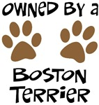 Owned By A Boston Terrier