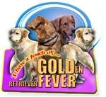 GOLD FEVER (GOLDen Retriever)