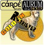 CARPE AURUM - SEIZE THE GOLD GOLDEN RETRIEVER