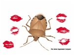 I love Stink Bugs