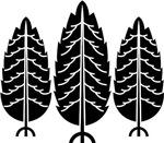 Japanese cedar (Sugi)