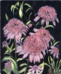 Echinacea Pinks