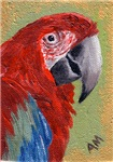 BIRDS - RED MACAW PARROT
