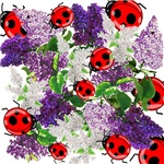 LILACS & LADYBUGS