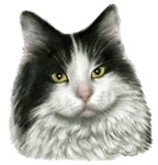 Marie - Black and White Long-Hair Cat