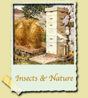 Insects & Nature