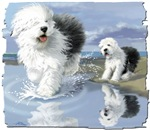 old English Sheepdog by the beache