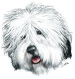 Sweet Old English seheepdog