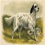 English Setter 1890 Digitally Remastered
