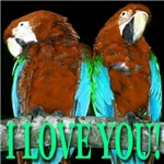 Two Parrots I Love You Skyblue Wings