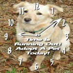Time Is Running Out! Adopt A Pet Today!
