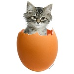 Kitty Egg