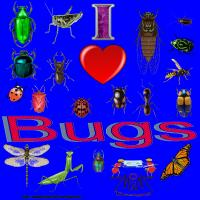 I love Bugs Section