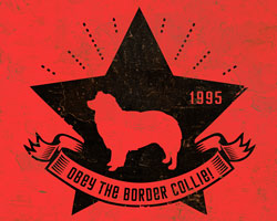 Border Collie Star Icon