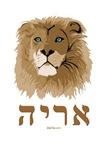 Aryeh Hebrew