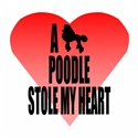 A Poodle Stole My Heart
