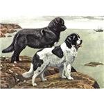 Newfoundland Dog Art