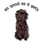 Good Affenpinscher