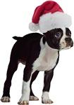 Boston Terrier Santa T-Shirts